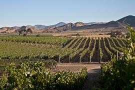 Vogelzang Vineyards, Santa Barbara County