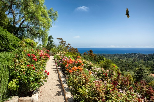 Rose gardens flourish in Montecito's ideal climate, permeating a sweet aroma across the grounds.